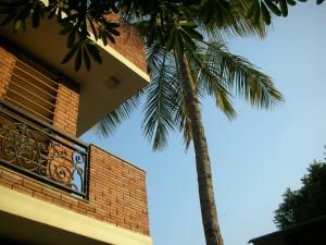 coconut-tree-Magpie Villa